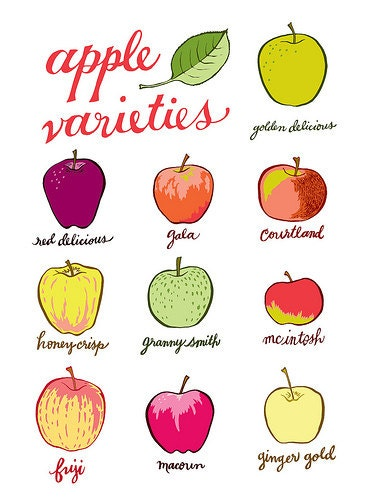 apple varieties - apple print - original illustration - giclee print