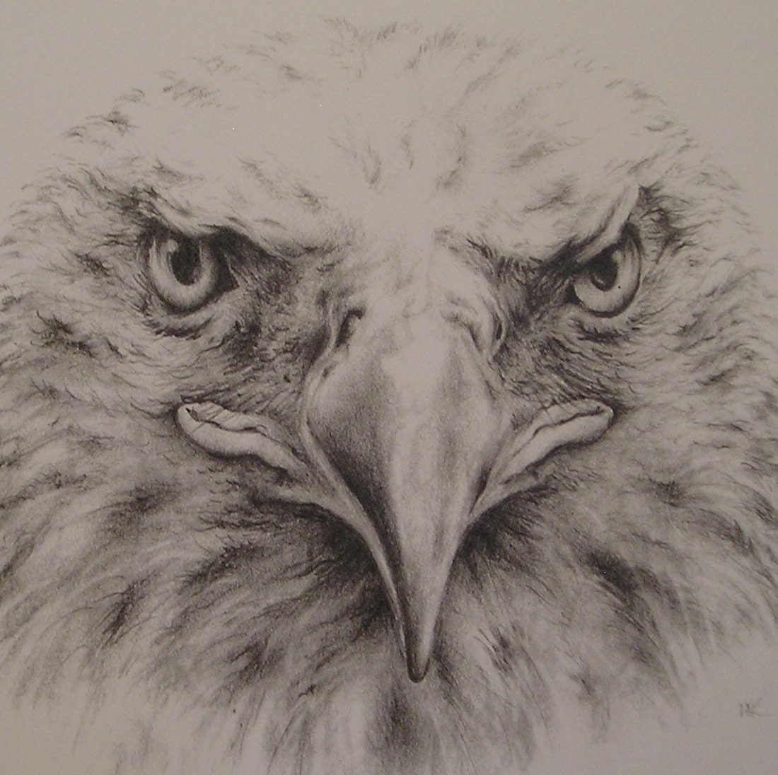 Bald Eagle Pencil Drawing - purpleinkgraphics