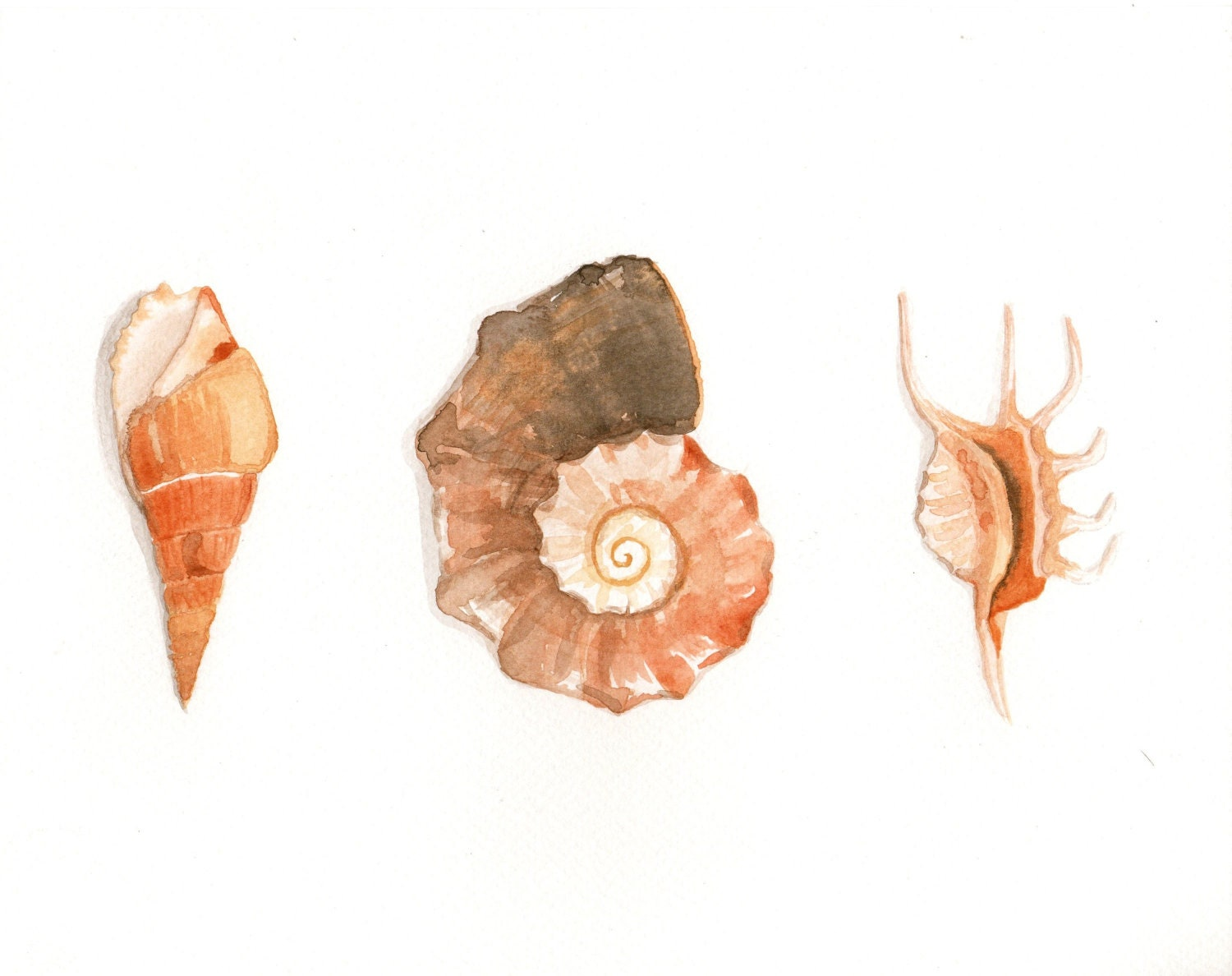 Original watercolor Painting - Seashells - MilkFoam