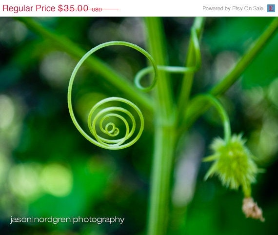 spiral nature photograph
