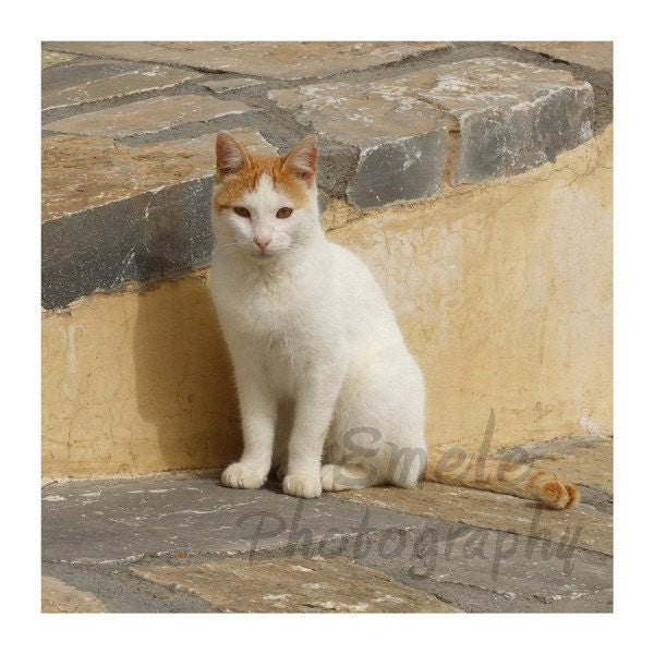 Greek Cat Print 5x5 - EmelePhotography