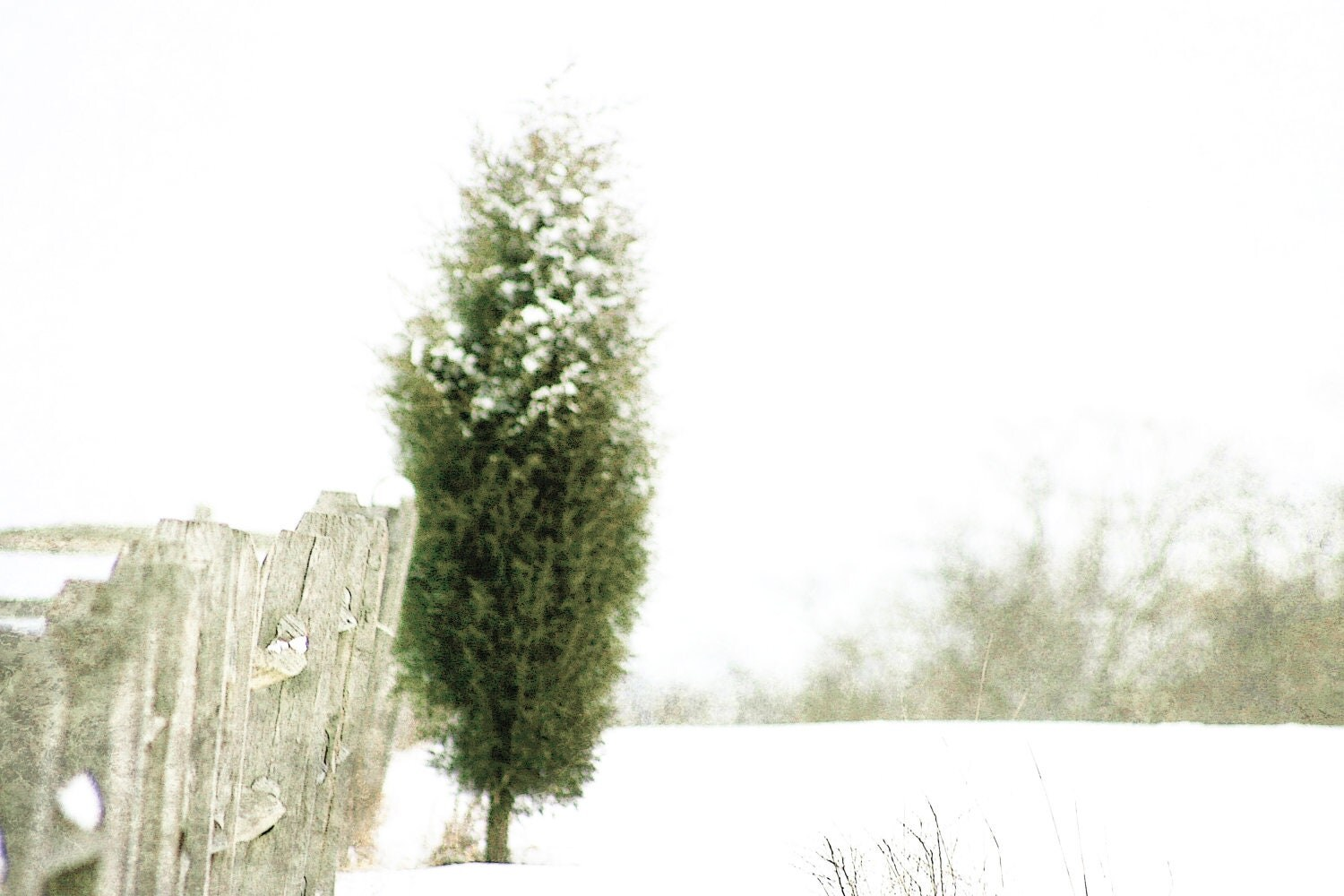 BOGO SALE, Winter Photography, white, snow, pale green, Snow Fence, nature fine art print 8x12 - moonlightphotography