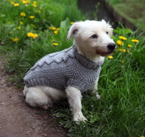 dog coat dog sweater hand knit in cable pattern by hotdoghandknits