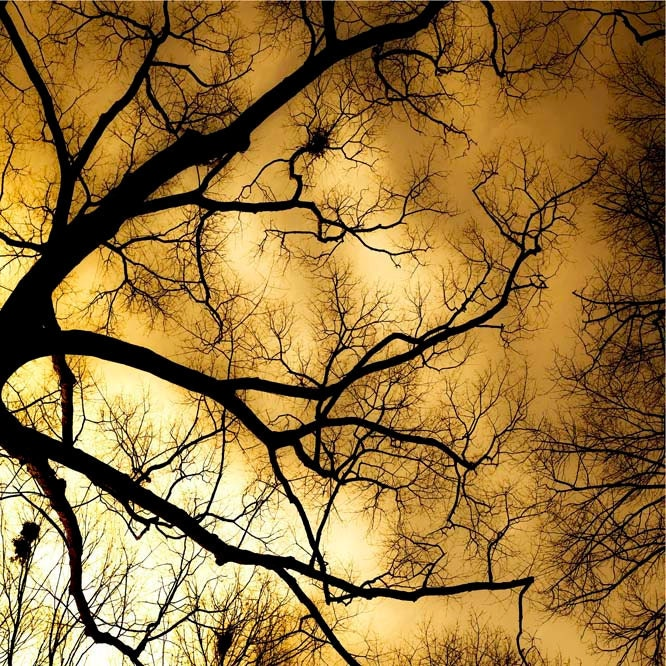 "Halloween art Spooky Autumn Photography topaz, harvest gold and black branches halloween woodland print  ""Burning sky"""