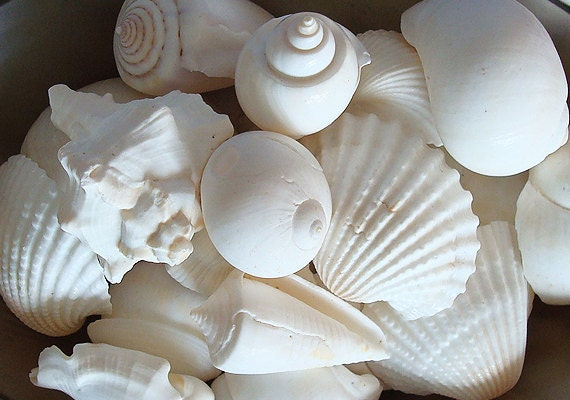 White Seashell Mix (15 pcs.)