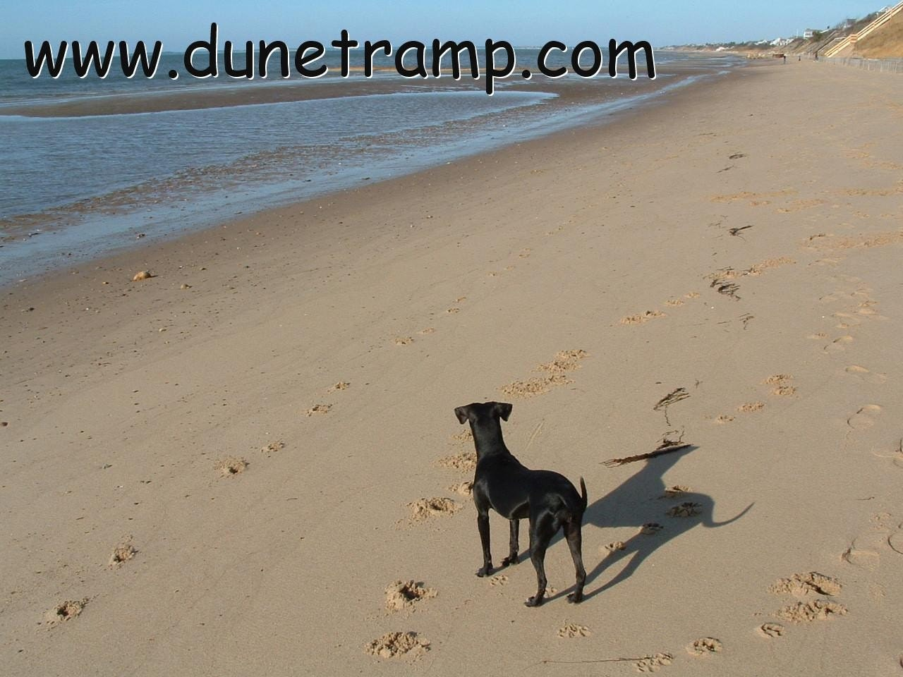BAYSIDE Cape Cod Dune Dog Photograph 5x7, Matted, Signed