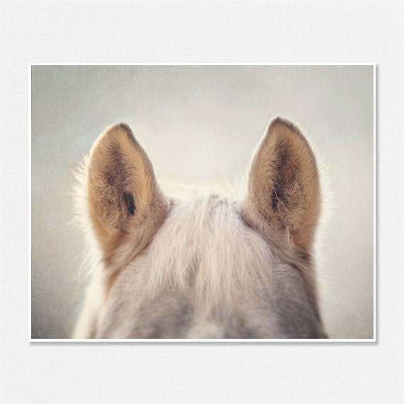 Horse Art, Horse Photography, Whimsical Horse Photo, Animal Photography, Nursery Decor, Fuzzy Horse Ears 8x10, Cream, Beige, Tan, Palomino. - LisaRussoFineArt