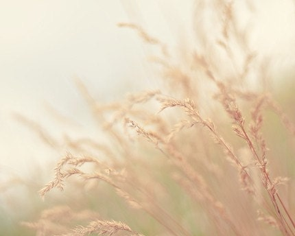 ready to ship, neutral nature photograph / earth tones, grass, wheat, oatmeal, beige / blowing in the wind / 8x10 fine art photo