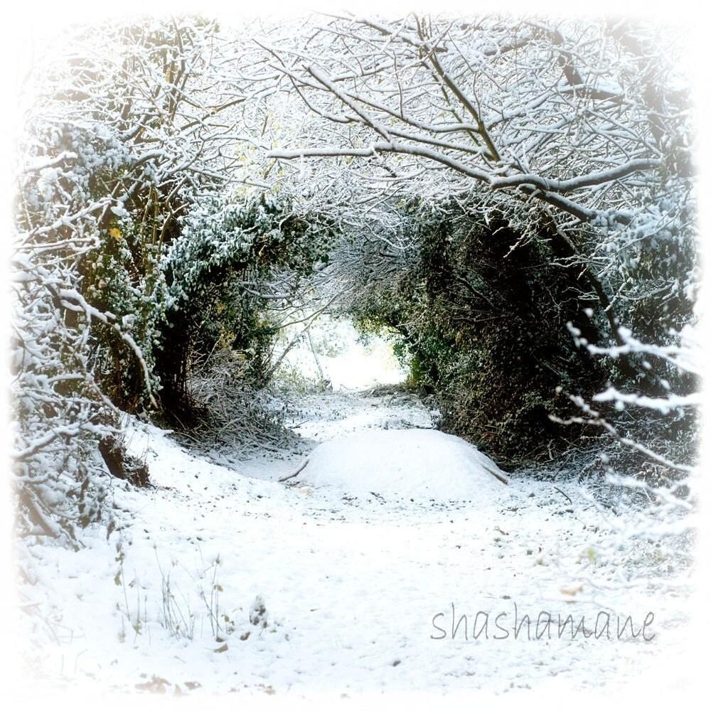 Narnia Gateway to another world 8x8 Fantasy Fine Art Photo, Snowy tree tunnel, fairytale