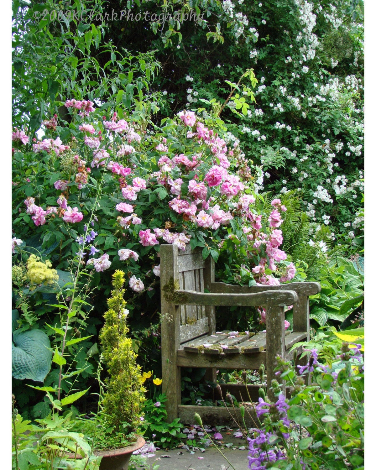 A Secret Garden 8x10 Photo 11x14 mat cottage english growing green nature roses flowers garden seat relax hidden decor - KClarkPhotography
