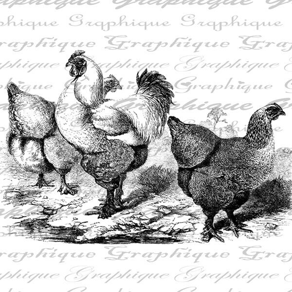 Rooster And Hens Birds Farm Animals Digital Image Download Transfer To Pillows Totes Tea Towels Burlap No. 2364