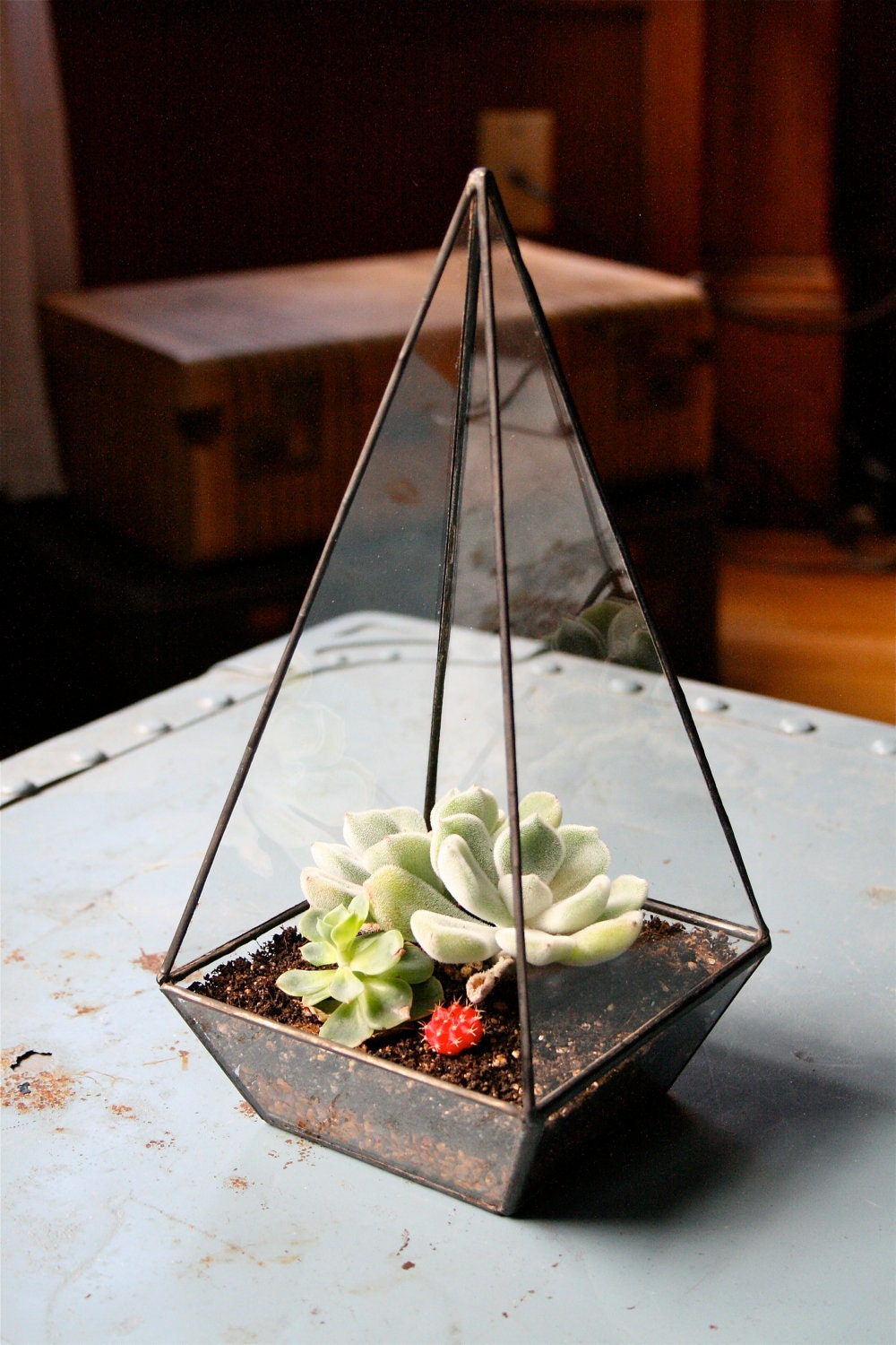 Obelisk Terrarium //made with recycled glass// - megamyers