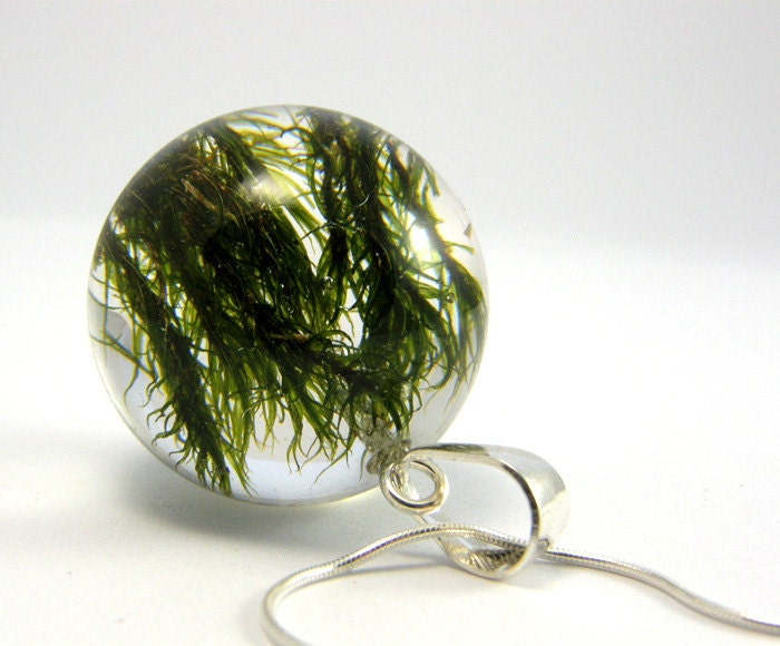 Pendant with moss