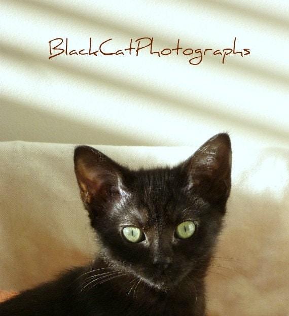 Animal photo, black cat picture, kitten 5x7 wall art, cute pet photograph