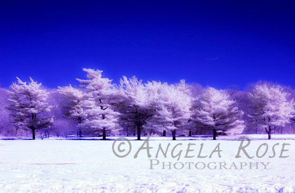 Abstract Winter Landscape - Infrared Photography- Fine Art Print - 8x12- Pink Trees - Snow - Surreal - Dreamy