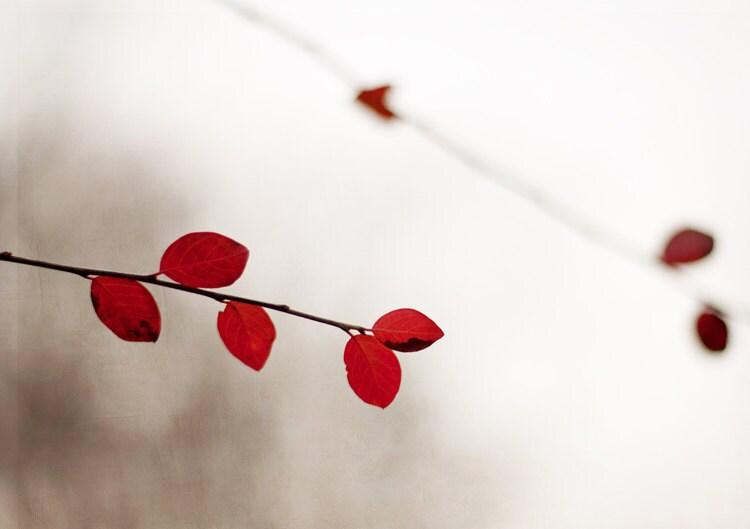 Fotografia da natureza, Um pouco de vermelho, 5 x 7, cópia da fotografia fine art - vermelho vibrante folhas de inverno casa decoração arte moderna mínimo