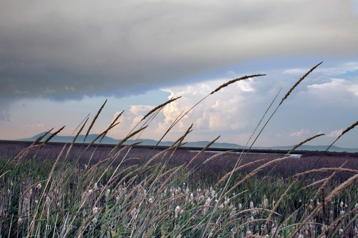 Windy Wetlands Stormy Grey Skies Photography Landscape Art Fine Art Nature Photograph 8x12 - MurrayBolesta
