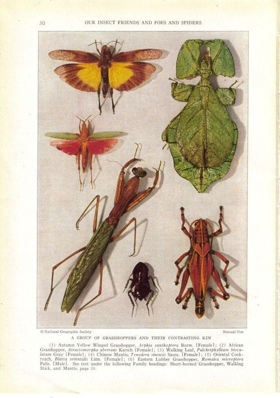 Strange Bug Antique Oddities Vintage Paper Ephemera Weird Insects - dadadreams