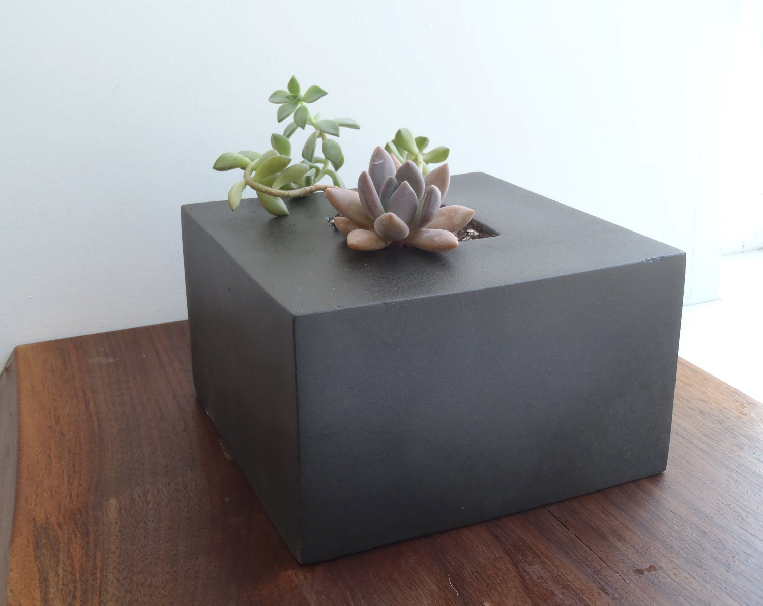 Black Cube Porcelaine Planter - LandMstudio