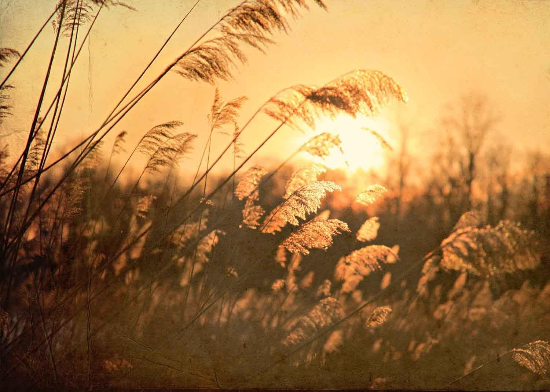 """Amber Reeds - Fine Art Photograph - 5"""" x 7"""""""