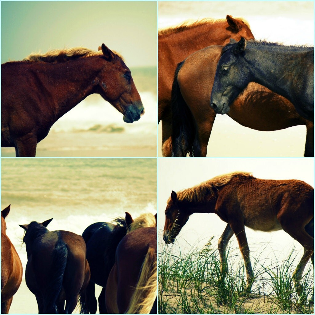 horse photography, photo set, outer banks, wild horses, beach photography, beach bum chix