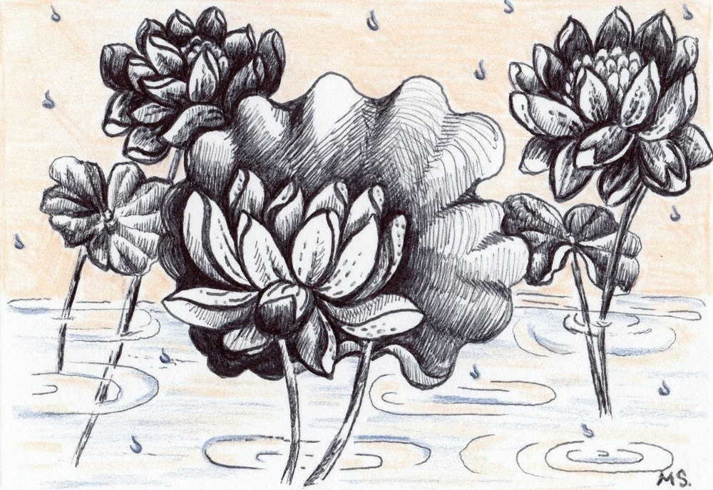 Lotus in the Rain- Lotus flower- Rain Drops- Pastel- Pen and Ink Drawing Hand Drawn Card - Michelebuttons