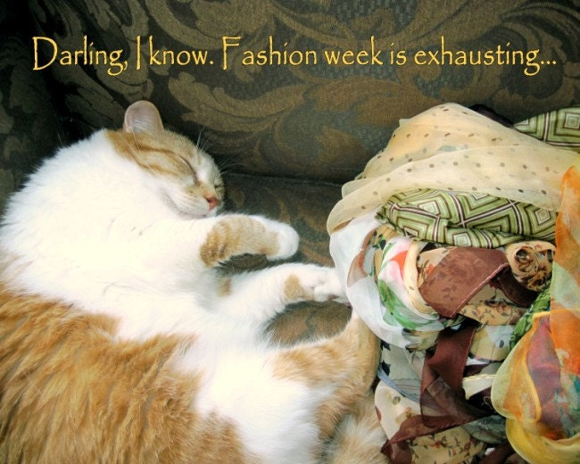 Photograph FASHION WEEK CAT, Darling, I Know. Fashion Week Is Exhausting. 20 x 16,  Poster Print, Fine Art Pet Photography