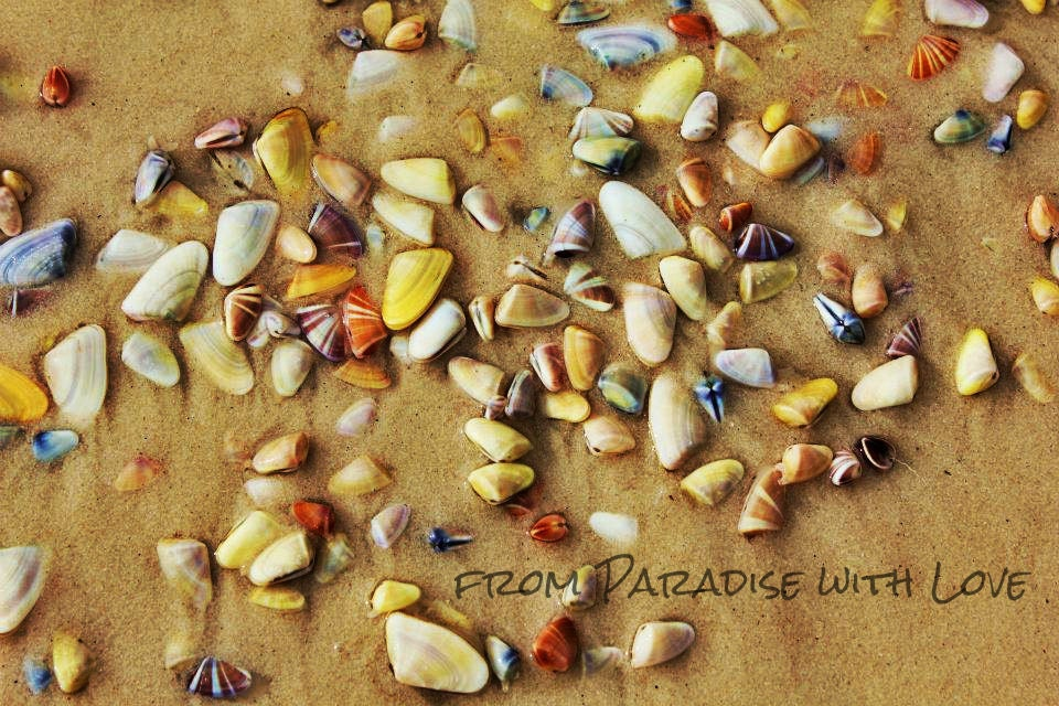 Seashells - Beach Photography - Colorful Shoreline - FromPARADISEwithLOVE