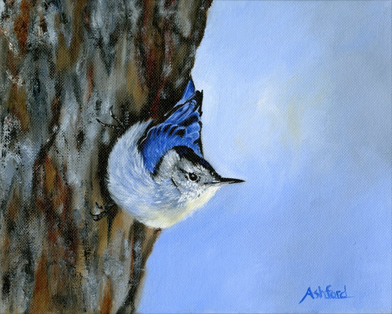 White Breasted Nuthatch, Giclee Canvas Print - Brushworksbb