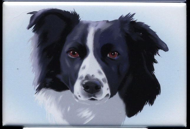 Border Collie cute dog art magnet - rubenacker