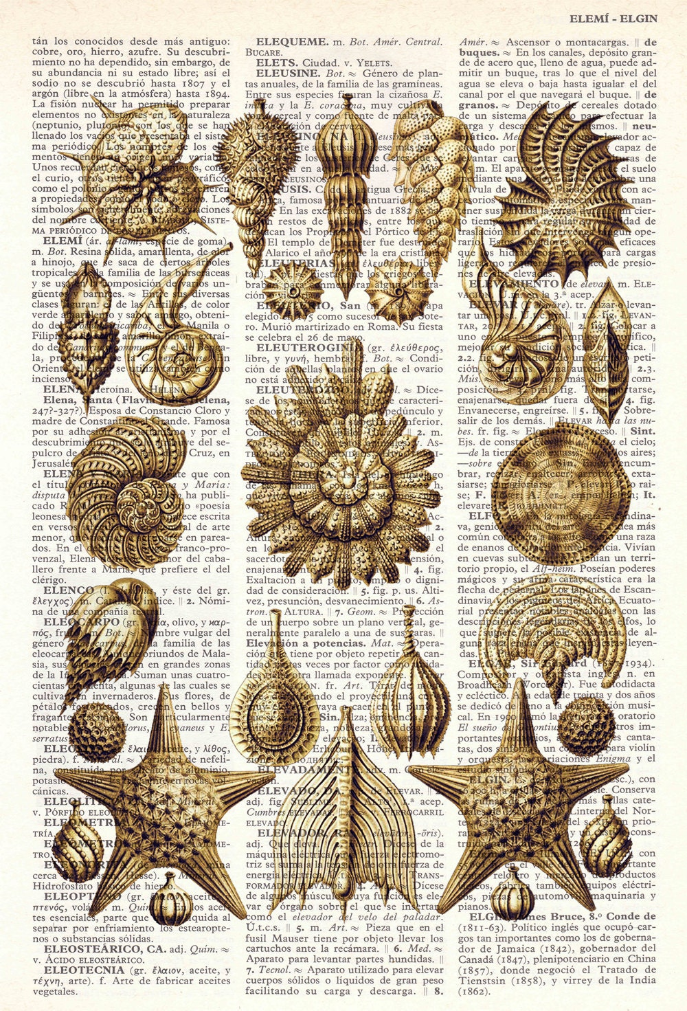 Book Print Dictionary or Encyclopedia Page Print- Book print Set Collage Shell Original  Vintage Design Print on Old Book art