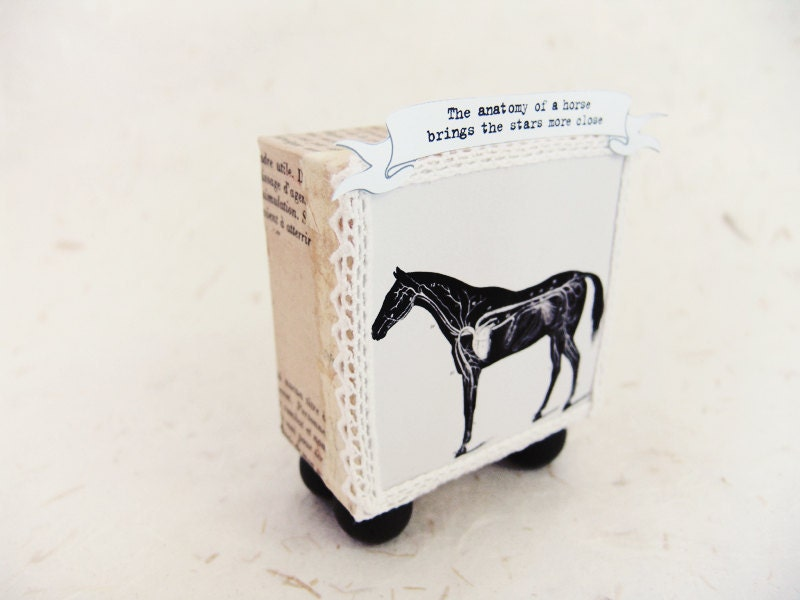 Light box diorama display -A horse anatomy- - ILaBoom