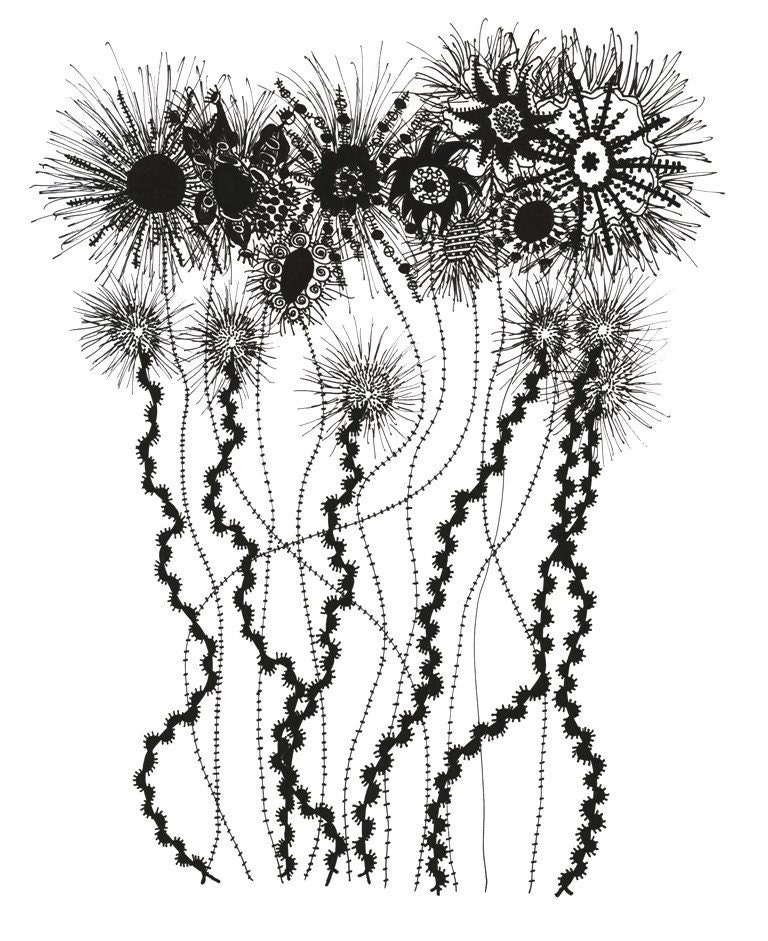 wild flowers and dandelions original drawing From pengwynneart