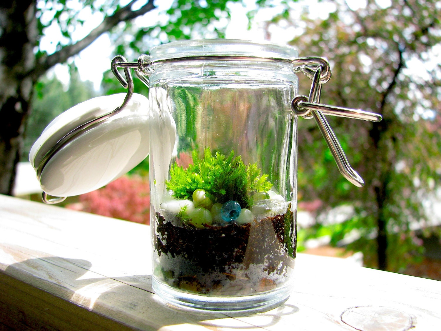 Tiny Terrarium: Sweet Tiny Glass Jar Moss Terrarium