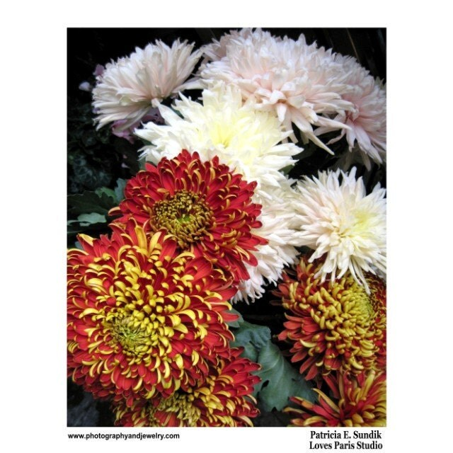 Mums Photo, Autumn Market  Mums, Switzerland,  16 x 20 inch,  Fine Art Poster Print