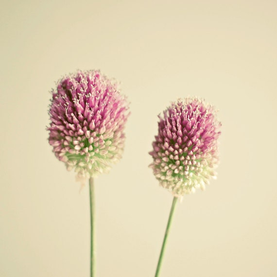 Two of a Kind - Flower photograph, nature art, flower art, pink and green, minimalist art, gift for Mom 8x8 Print - LolasRoom