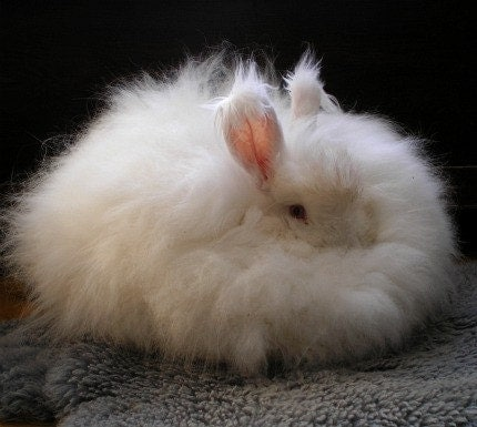 "White Angora Rabbit Spinning Fiber from Friends in Fiber 1 oz. ""Snezhinka"""