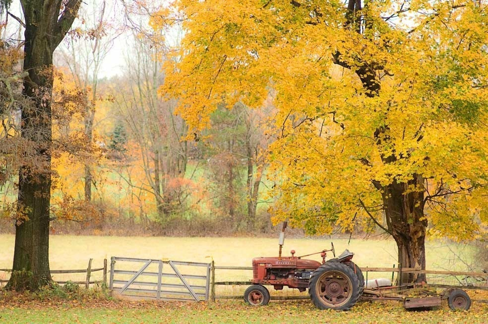 Nature Photography, autumn tractor orange fall rust red yellow golden leaves - fine art harvest photography