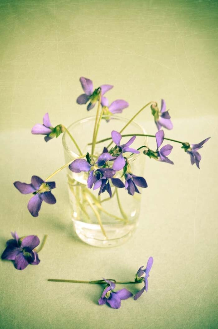 la violette2. purple lavender violet flowers aqua feminine girly nostalgic romantic vintage style photo - 5x7 Fine Art Photography Print - joystclaire