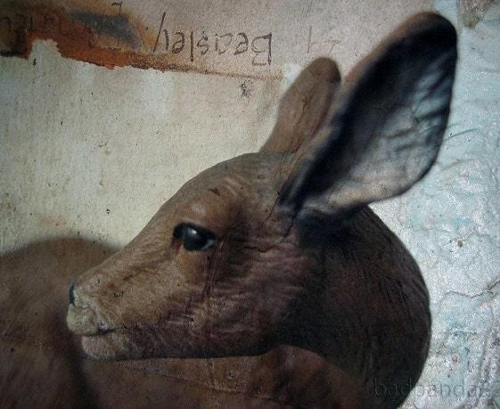 """Vintage """"Deer face""""  - Fine Art Photography 8x10"""" Matte Print in colour, Deer Photography, Vintage Room Decor - blankettiger"""