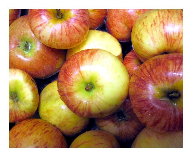 Apples Photo, Autumn Apple Harvest,  20 x 16 inch,  Fine Art Poster Print