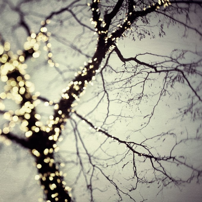 Winter Photography Tree Bare Branches Christmas Home Decor Titanium Grey Silver Lights Enchanted  - On a cold winter night - EyePoetryPhotography