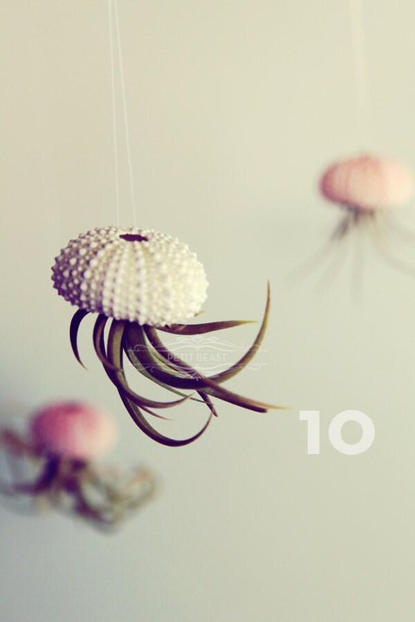 Ten Jellyfish Air Plants // Sea Urchins Hanging Art Installation Wedding Favor Decor Gift Mini Terrarium Kit DIY tiny cute tillandsia