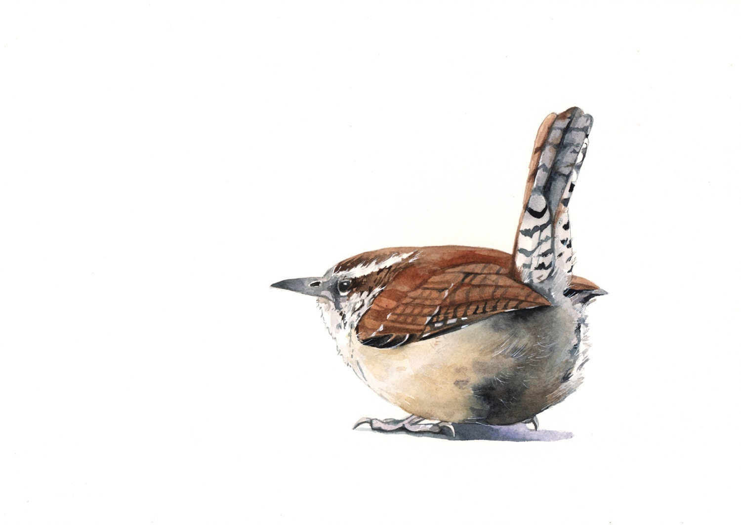 Wren Painting - W001 bird Print of watercolor painting A4 - Splodgepodge