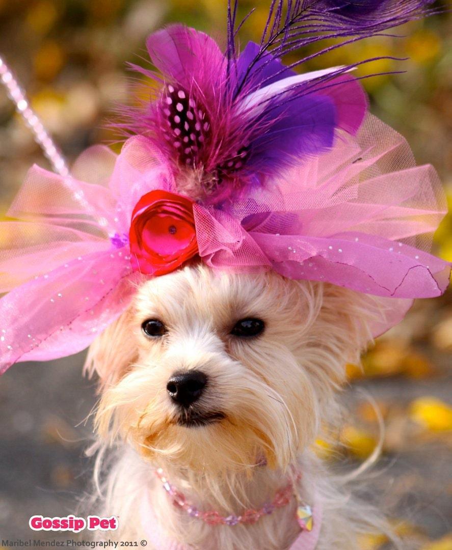 Дерби Собаки перо Hat