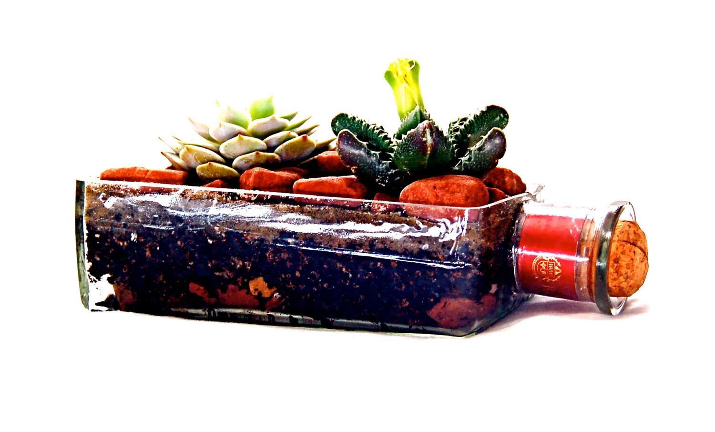 1800 Tequila Bottle Garden Planter // Succulent or Airplants - BottleGardens