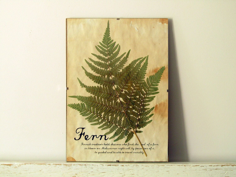 Pressed Herbs- Fern in Frame (6) - regularhome