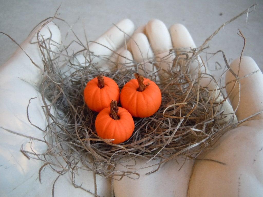 Miniature Pumpkins Fall Autumn Orange Harvest