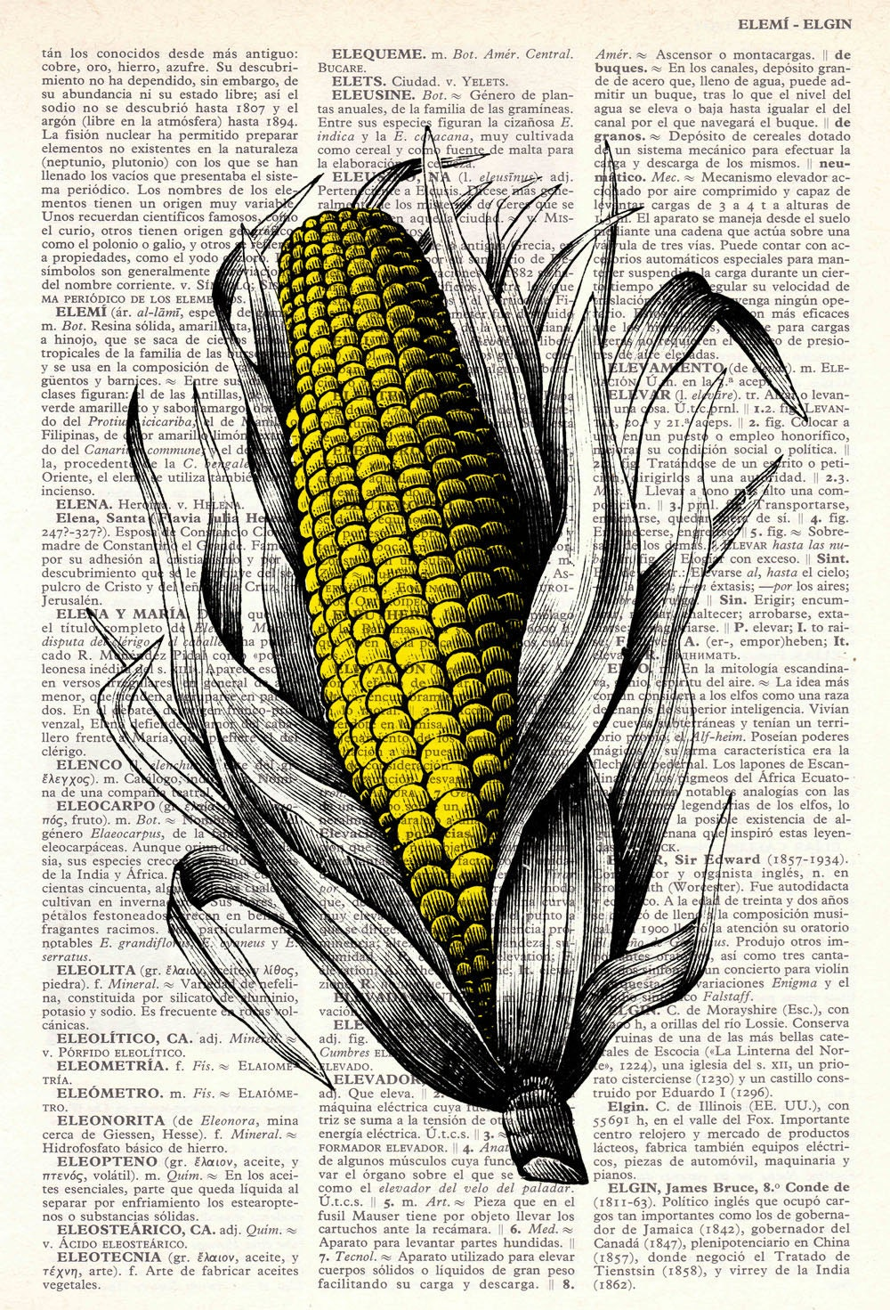 Vintage Book Print Dictionary or Encyclopedia Page Print- Book print Corncob  Maize Print on Vintage Dictionary Book art