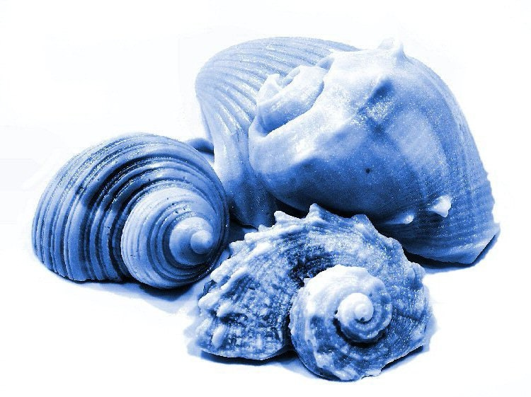 Sea Shell Soap - Decorative Soap Gift Set of 5 Any Color - SoapRhapsody
